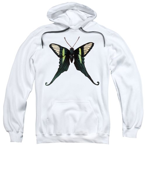 Winged Jewels 3, Watercolor Tropical Butterfly With Curled Wing Tips Sweatshirt