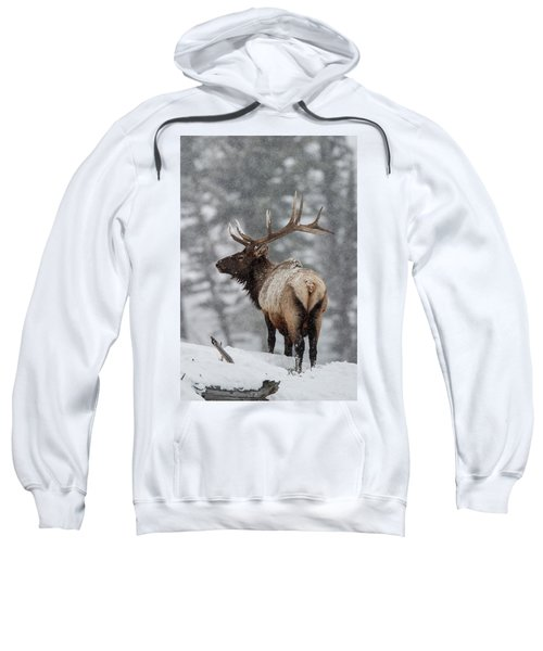 Winter Bull Elk Sweatshirt