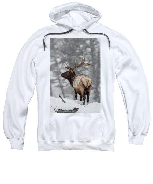 Winter Bull Elk Sweatshirt