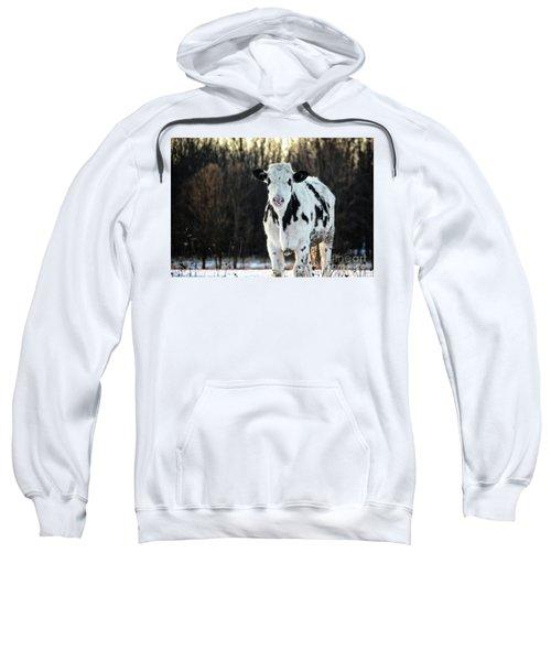 Wisconsin Dairy Cow Sweatshirt