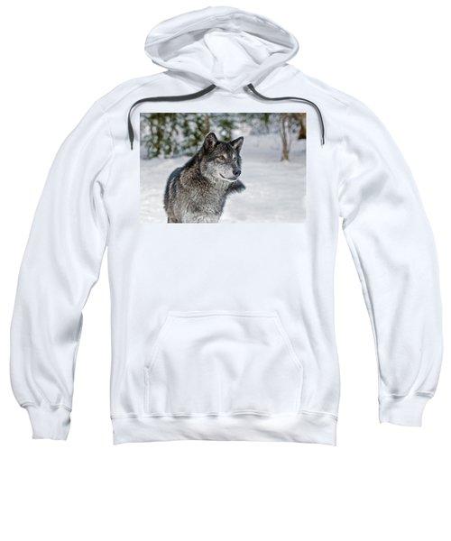 Wolf Portrait Sweatshirt
