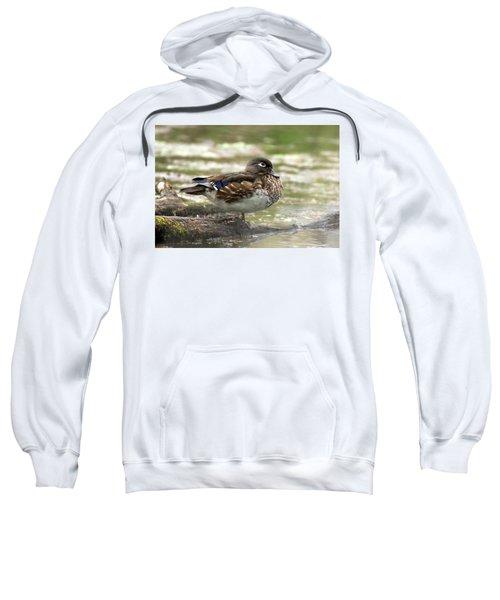 Wood Duck Hen Sweatshirt