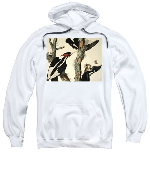 Woodpecker Sweatshirt