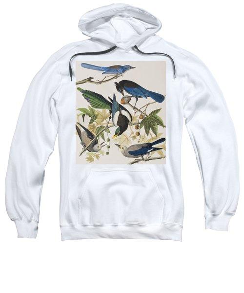 Yellow-billed Magpie Stellers Jay Ultramarine Jay Clark's Crow Sweatshirt