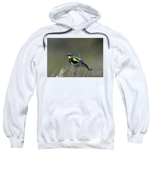 Yellow-rumped Warbler Sweatshirt by Mike Dawson