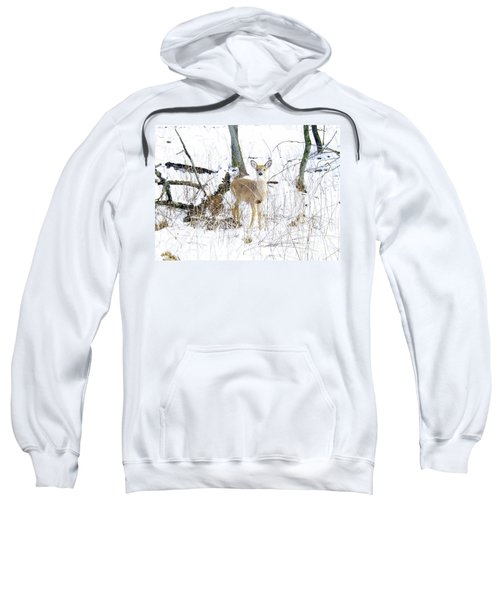 Young Doe And Spring Snow Sweatshirt
