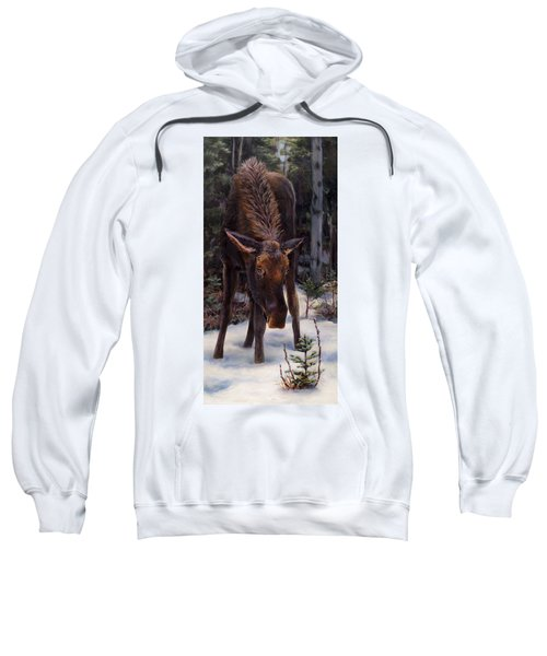 Young Moose And Snowy Forest Springtime In Alaska Wildlife Home Decor Painting Sweatshirt