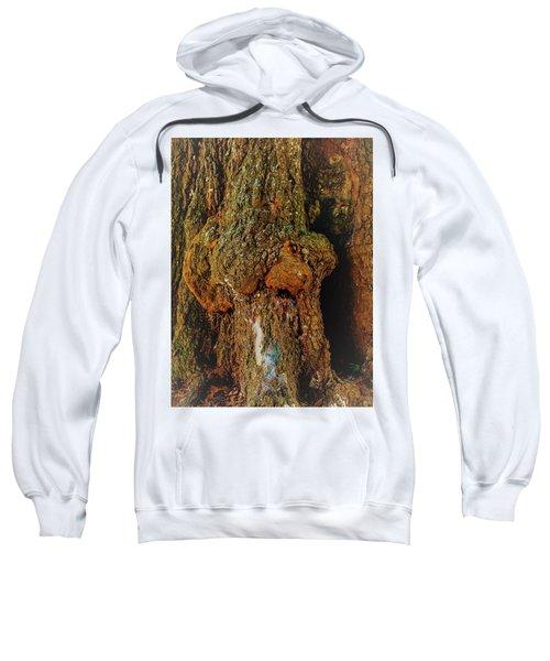 Z Z In A Tree Sweatshirt