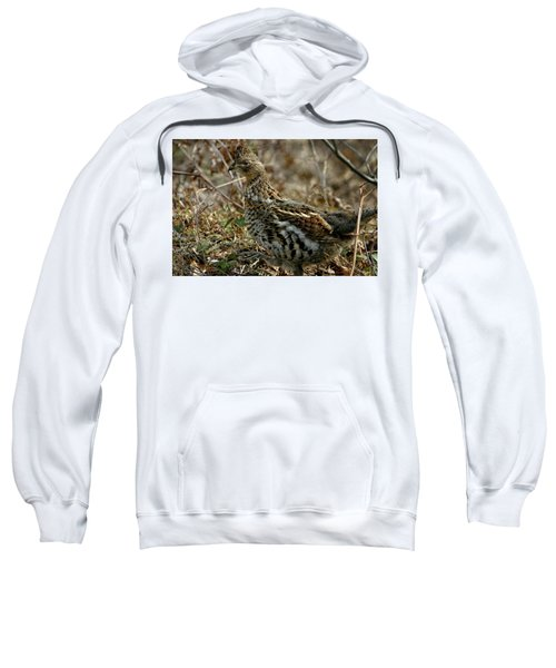 Ruffed Grouse 50702 Sweatshirt