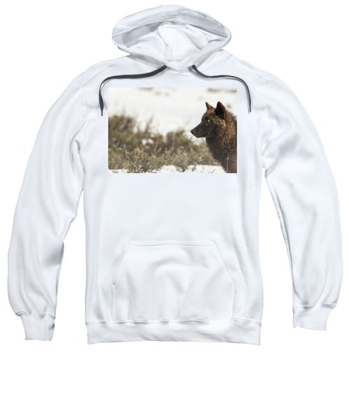 W15 Sweatshirt