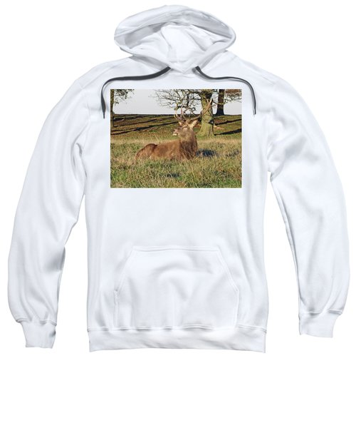 28/11/18  Tatton Park. Stag In The Park. Sweatshirt