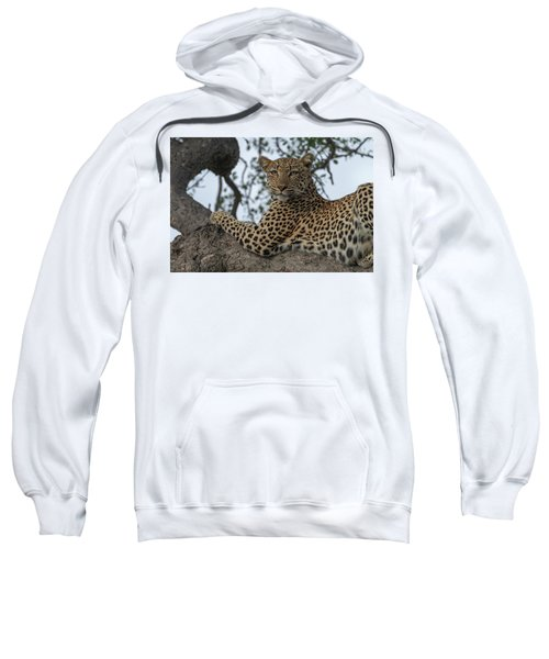 A Leopard Gazes From A Tree Sweatshirt
