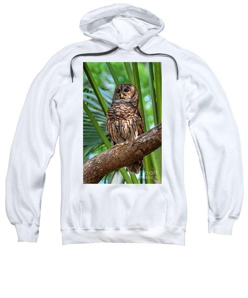 Barred Owl On Perch Sweatshirt