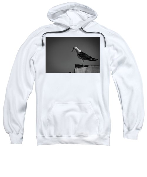 Calling Hitchcock Sweatshirt
