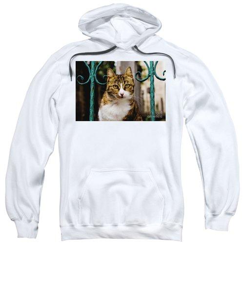 Cat On A Fence Sweatshirt