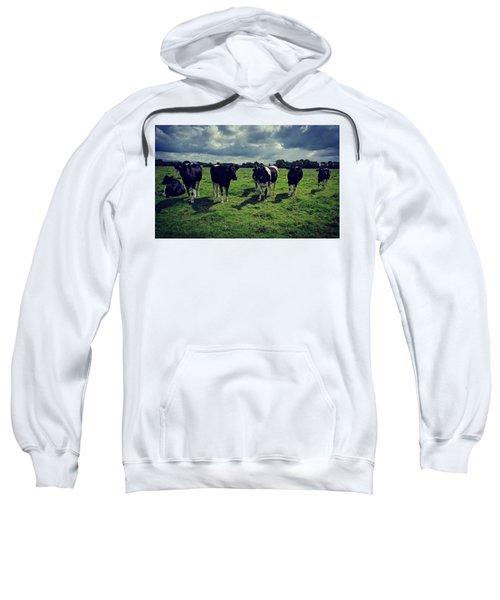 Dairy Heifers Sweatshirt