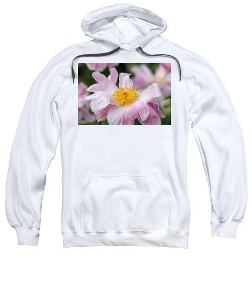 Delicate Pink Peony Sweatshirt