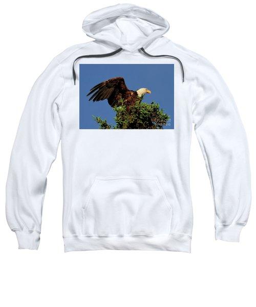 Eagle In Treetop Sweatshirt