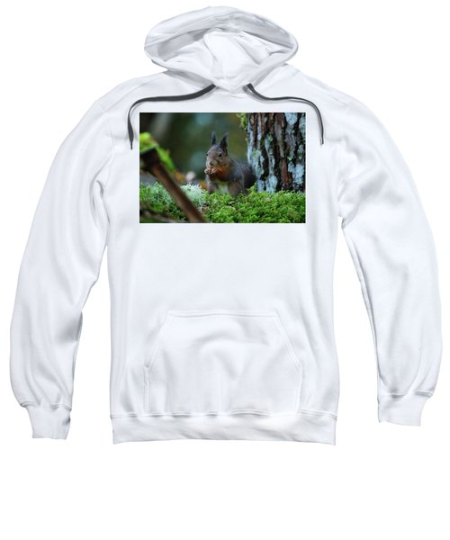 Eating Squirrel Sweatshirt