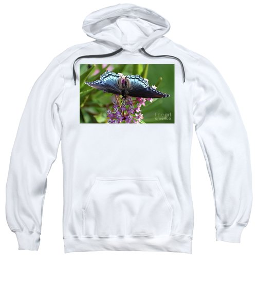 Eye Level With A Red-spotted Purrple Sweatshirt