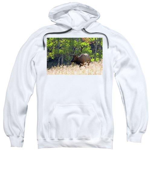 Fall Color Rocky Mountain Bull Elk Sweatshirt