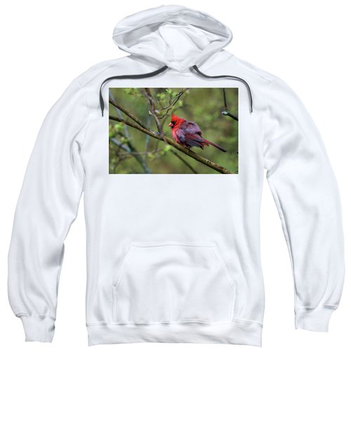 Fluffing Up My Feathers Sweatshirt
