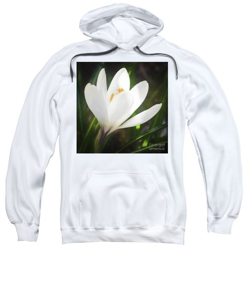 Glowing White Crocus Sweatshirt