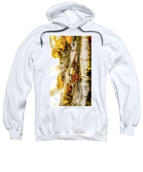 Golden Drop Sweatshirt