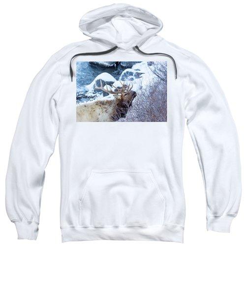 Grazing Elk Sweatshirt