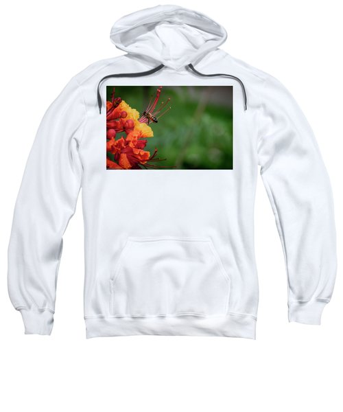 Honey Bee Extraction Sweatshirt