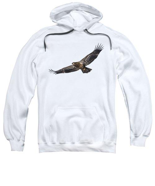 Isolated Bald Eagle 2018-3 Sweatshirt