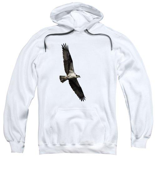 Isolated Osprey 2019-3 Sweatshirt