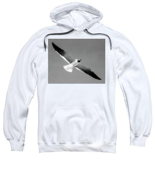 Laughing Seagull Sweatshirt