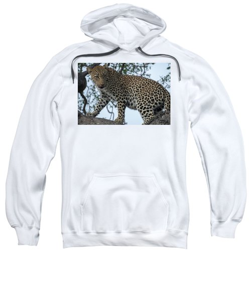 Leopard Anticipation Sweatshirt