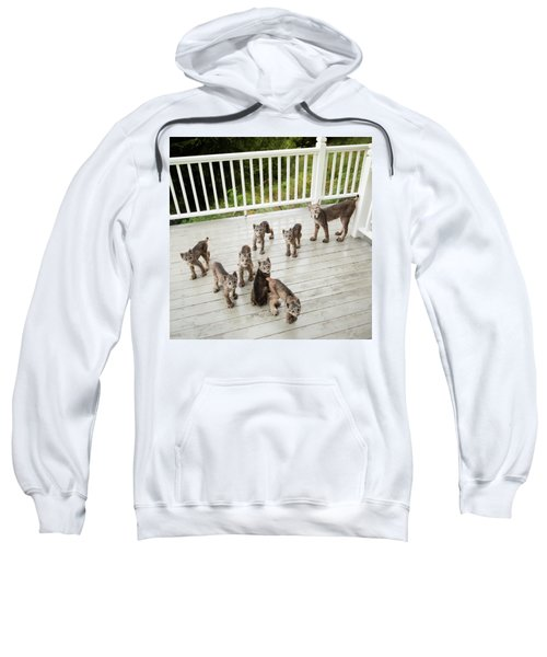 Lynx Family Portrait Sweatshirt