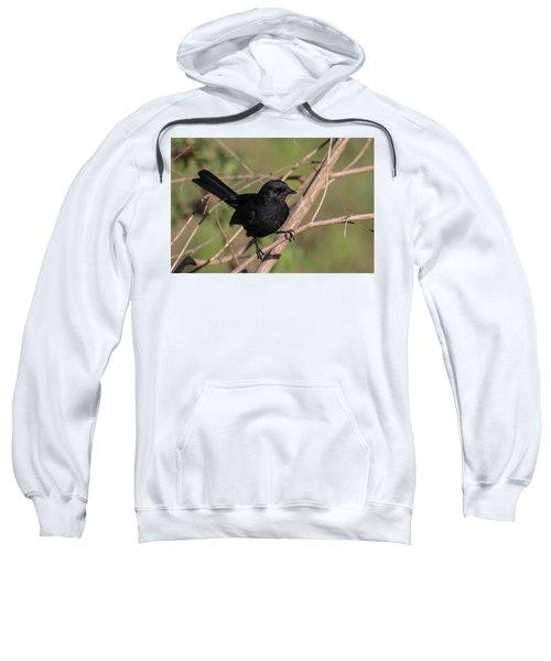 Northern Black Flycatcher Sweatshirt