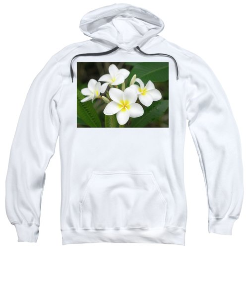 Pleasing Plumeria Sweatshirt