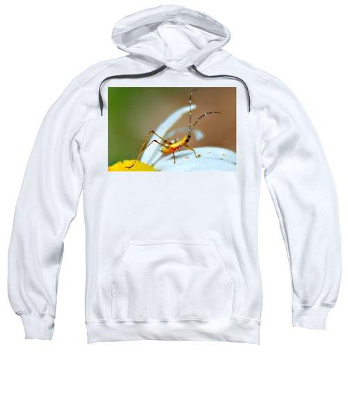 Pollen Tracks Sweatshirt