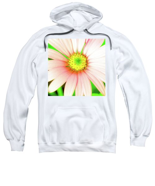 Pop Art Osteospermum 1 Sweatshirt