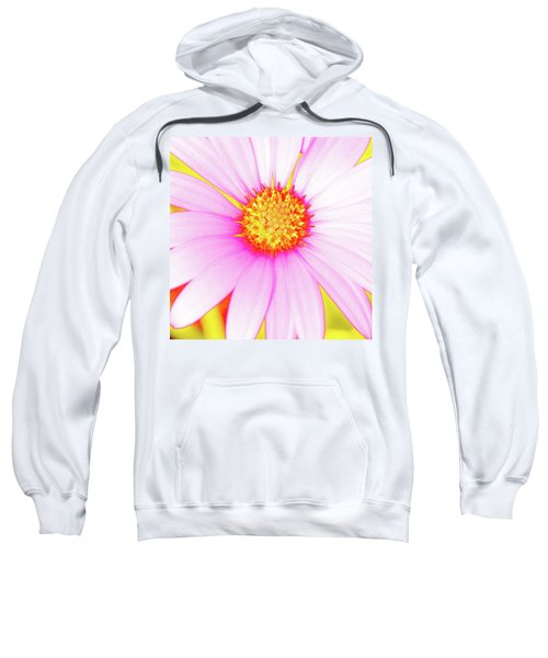 Pop Art Osteospermum 3 Sweatshirt