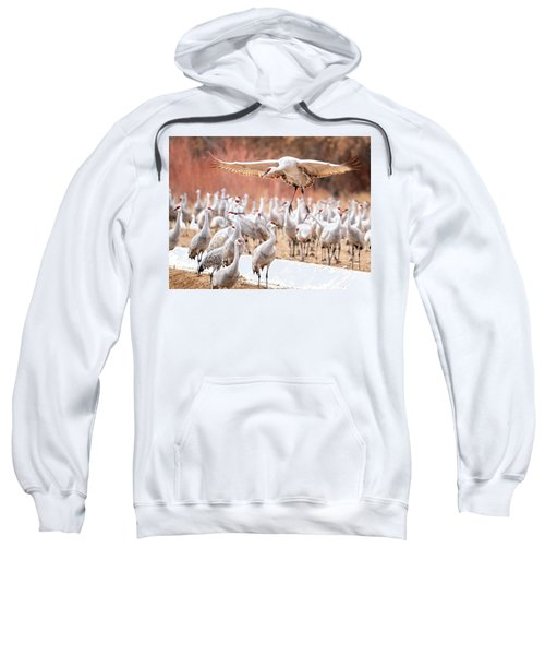 Ready Or Not, Here I Come -- Sandhill Cranes Sweatshirt