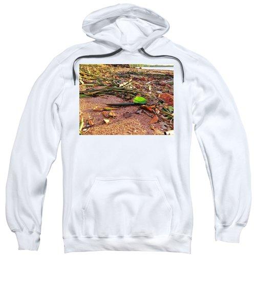 Seed Pod Beach Sweatshirt