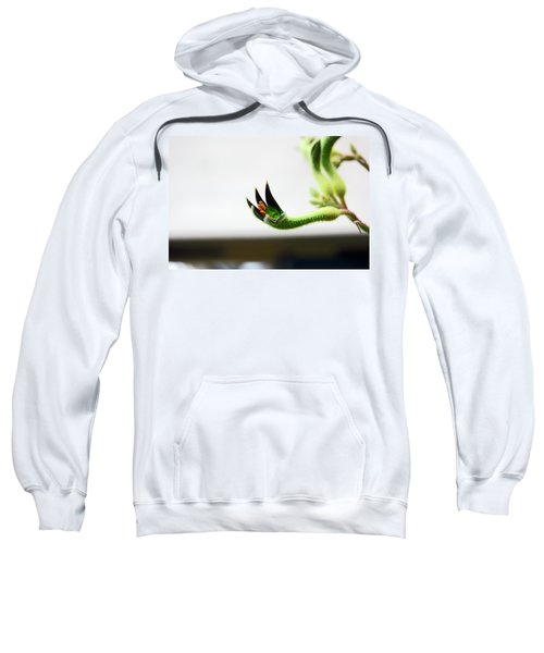 Sheffield. The Botanical Gardens Pavillions Sweatshirt