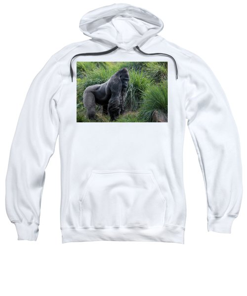 Silverback Stare 1806 Sweatshirt