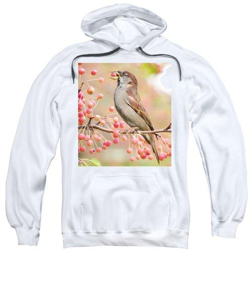 Sparrow Eating Berries Sweatshirt