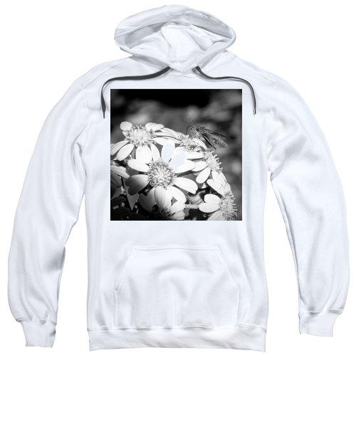 Spotlight To Pollinate Sweatshirt