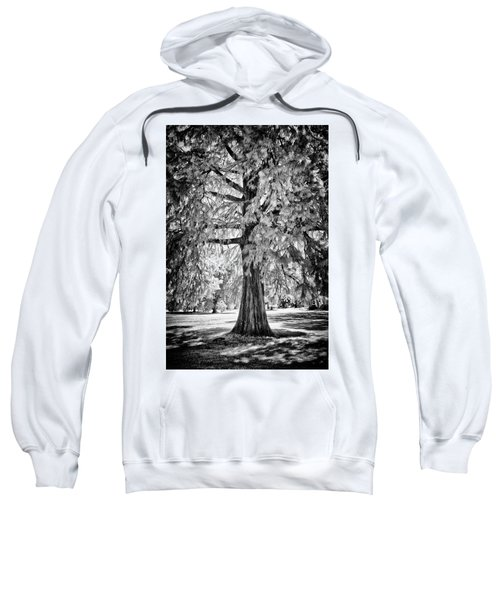 Standing Tall Old Tree - I R Sweatshirt