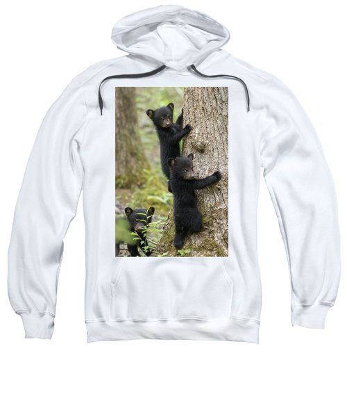 Three Little Bears Sweatshirt