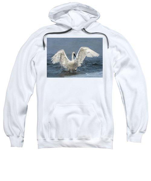 Trumpeter Swan Splash Sweatshirt