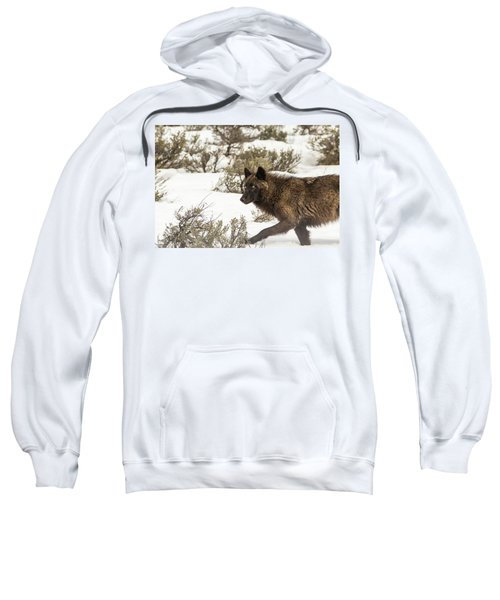 W5 Sweatshirt